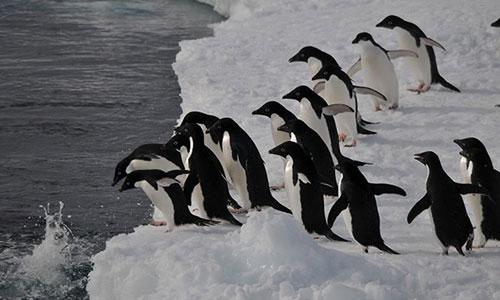 [銀座] What is the 南極【満席のためキャセル待ち】