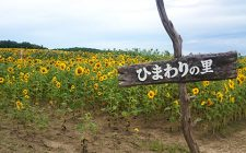 toyohira_170823_00